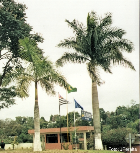 palmeira imperial1_Fotor